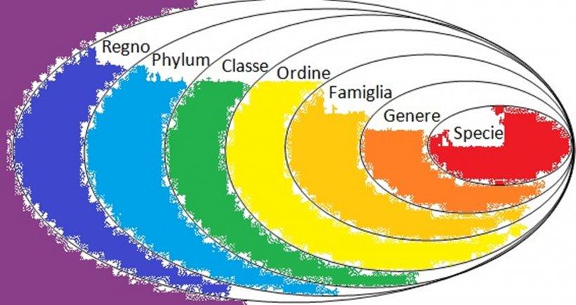 classificazione del regno animale