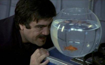 Che sia allergico al pesce rosso?