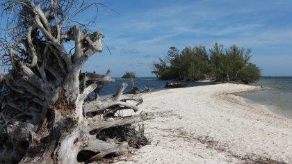 tronco su spiaggia