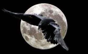 [Report] Il Trono di Spade in 12: corvi messaggeri V