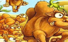 Camel Up: Il Gioco di Carte – Unboxing