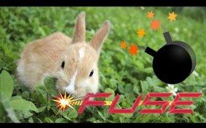 Fuse e il campo di conigli felici!