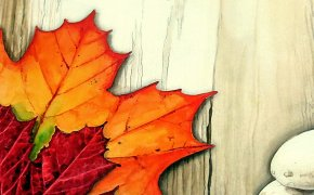 Indian Summer – Unboxing