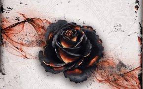 Black Rose Wars: uno scontro atipico