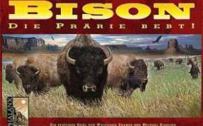 Bison: Thunder on the Prairie